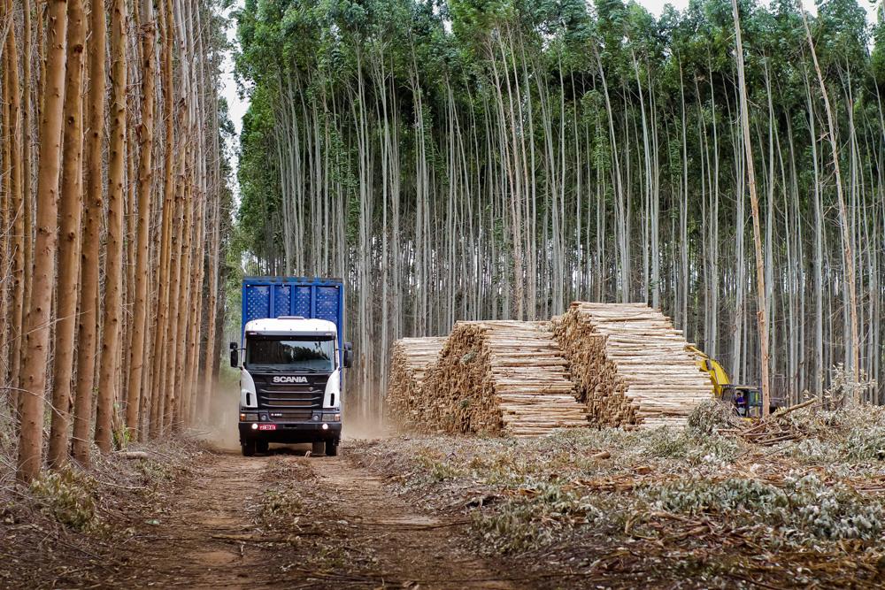 Тяжелый лесовоз Scania G 480 6x4 в Бразилии, 2012